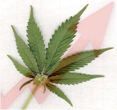 Marijuana Trend